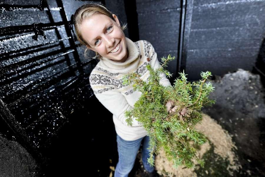 Skaper gull av grønne enger