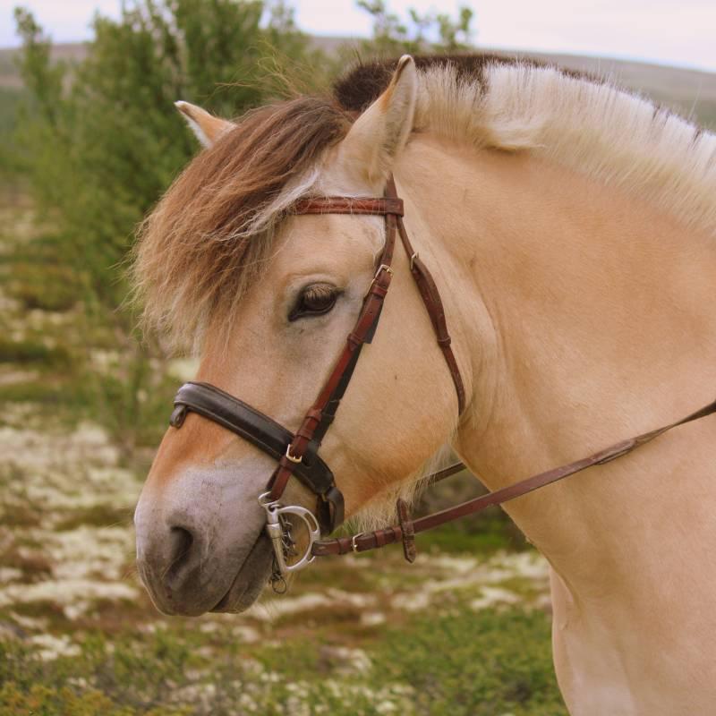 Rendalen Fjellridning og Hesteaktiviteter