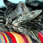 sleeping kitties
