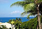Maui Banyan