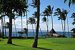 Napili Shores Resort