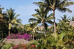 Maui Kamaole M204