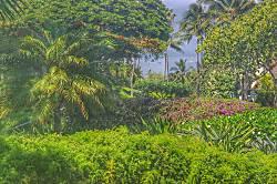 Maui Kamaole #I-109