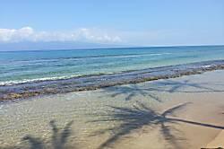 Maui Sands 711