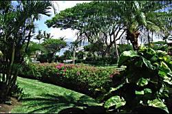 Maui Kamaole B115