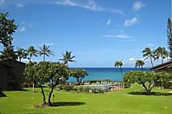 Polynesian Shores