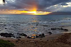 Maui Banyan P410