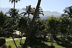 Maui Banyan Q205