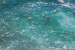 Poipu Shores 301B