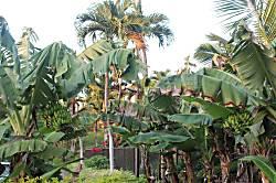Ekahi Village 25A