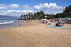 Maui Banyan P-306
