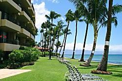Paki Maui 416