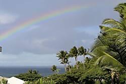 Maui Banyan Condo Rental