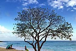 Kiahuna Plantation 243