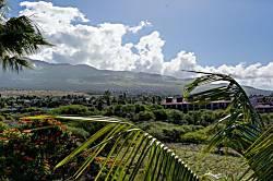 Maui Banyan H505