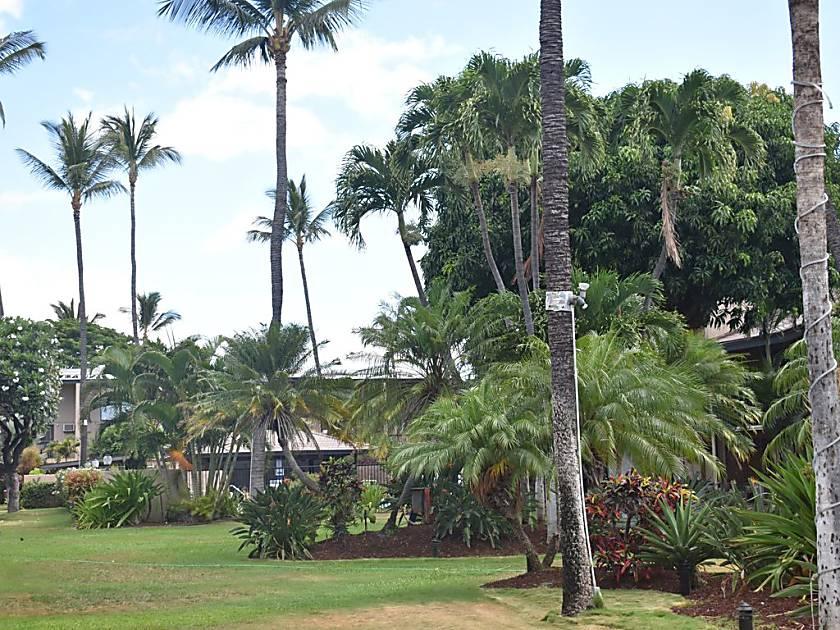 Kihei Garden Estates C203