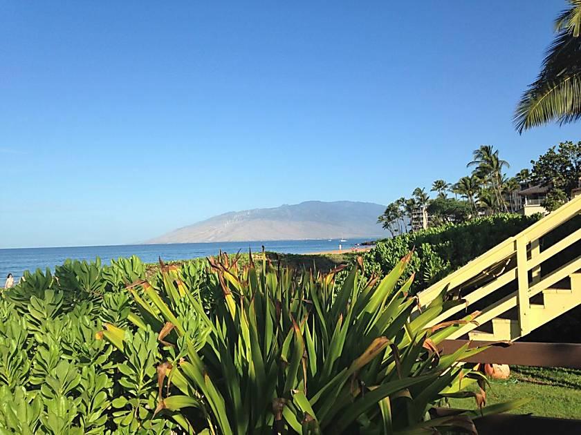 Maui Banyan T308