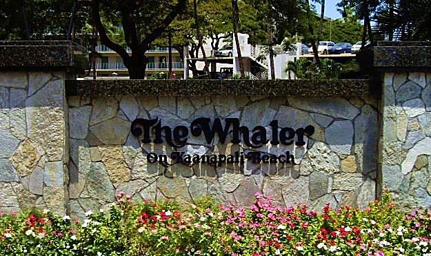 The Whaler 515