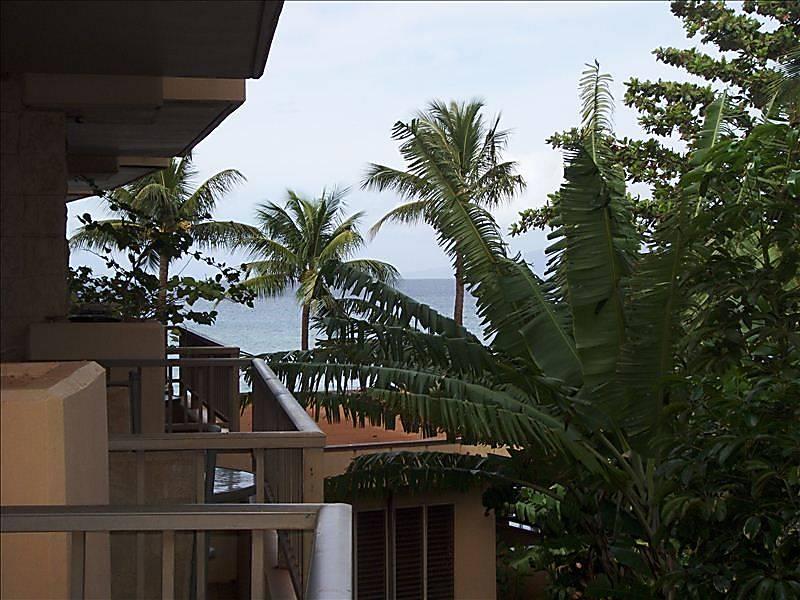 Paki Maui 227
