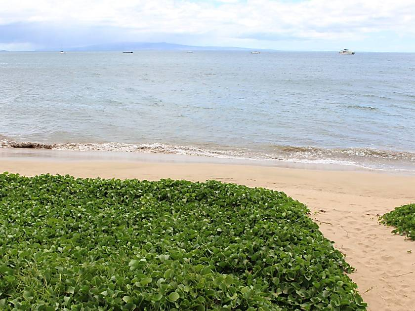 Sugar Beach Resort 410