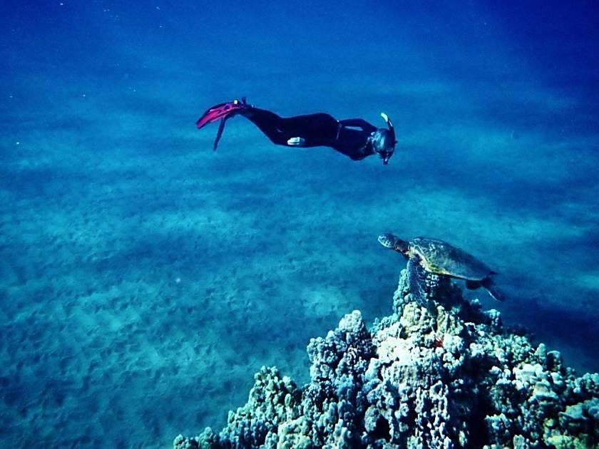 Polynesian Shores Condo 221