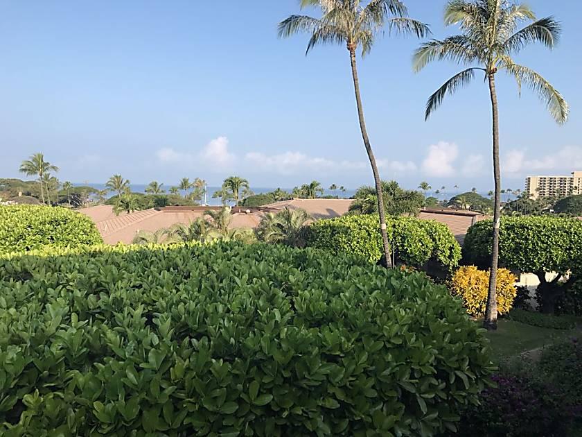 Maui Eldorado D 203