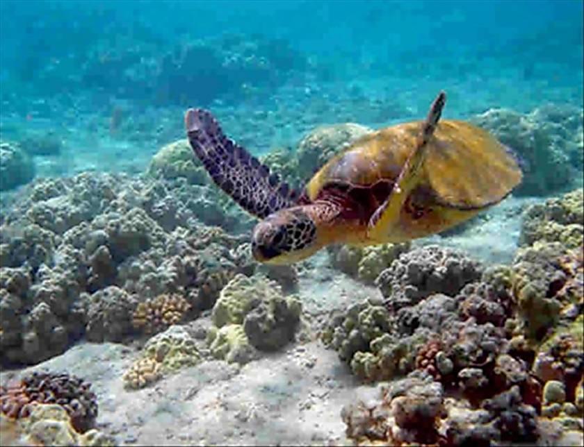 Maui Kamaole K101