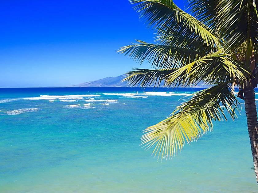 'Livin the Aloha Dream'