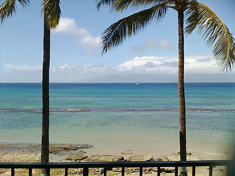 Paki Maui 203