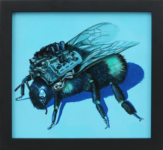 Blue Bee Study