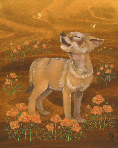Coyote Pup In Poppy Dreams