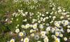 Kwietne łąki na wiślańskim międzywalu
