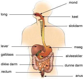 voeding darmen