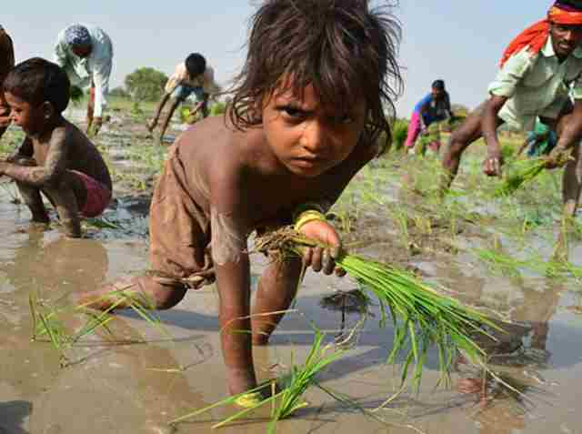 child labour in india in hindi Indian parliament passes contentious child labour bill measure to allow children to work in family businesses while shortening the list of banned jobs for children.