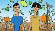 Genetic Engineering - GMO Food