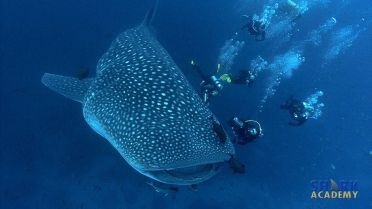 Whale Shark - Facts