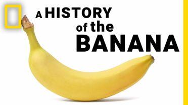 Banana - History of Cultivation