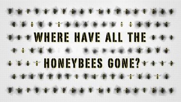 Honey Bee - Danger of Extinction