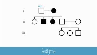 Genetics - Pedigree Chart