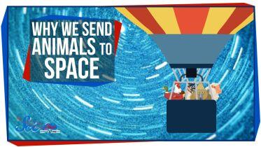 Spaceflight - Animals in Space