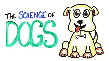 Dogs - Facts