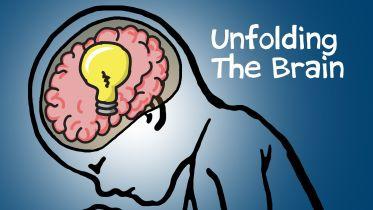 Brain - Physical Characteristics
