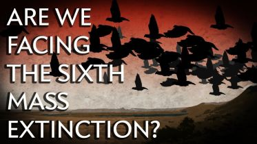 Mass Extinction Event