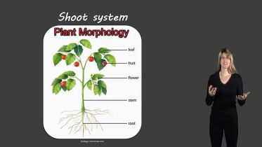 Plants - Shoot System