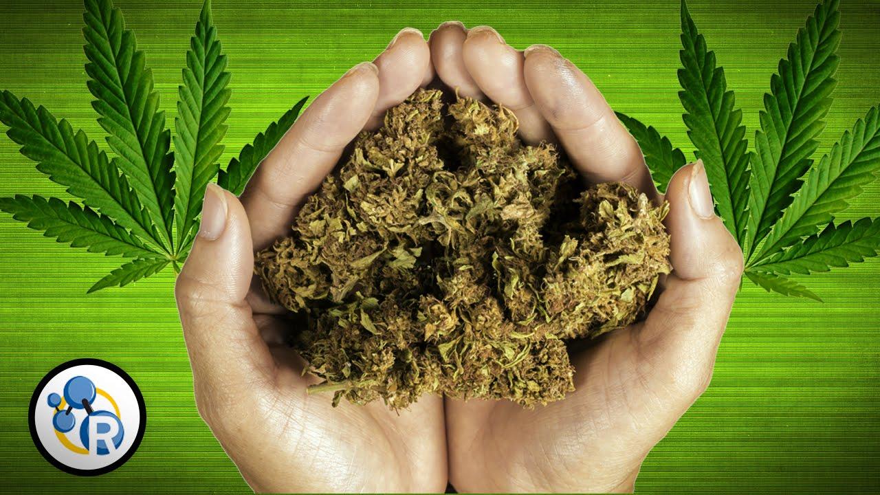 Marijuana - Chemical Effect