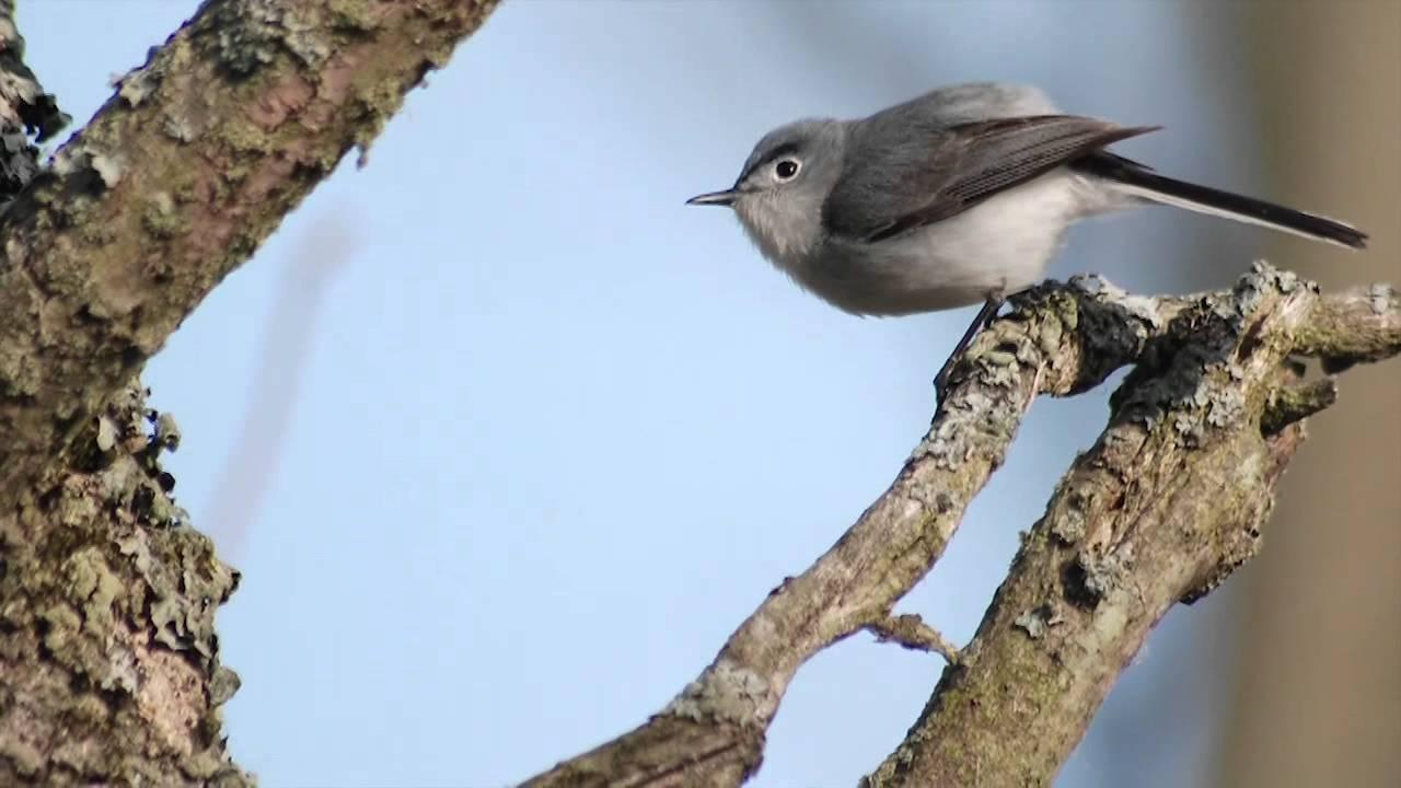 Bird Migration - Unseasonal Migration