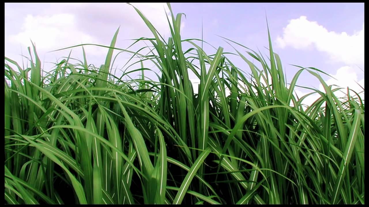 Biofuel - Future Prospects