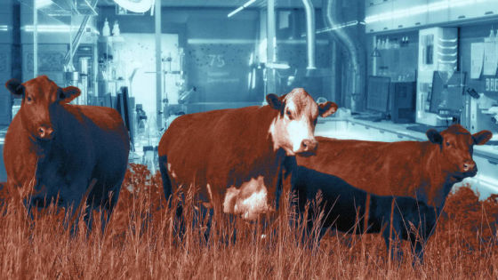 Once we have lab-grown meat, will we still need animal advocacy?