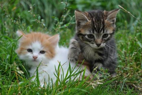 Das müssen angehende Katzenhalter wissen