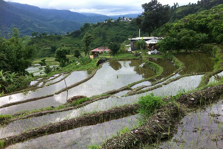 land wet rice